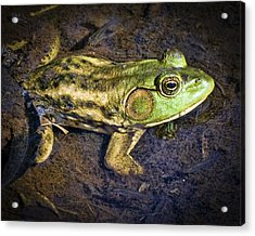 Barataria Swamp Frog Acrylic Print by Ray Devlin