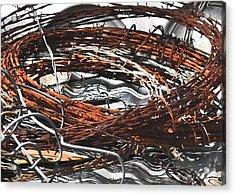 Barbed Acrylic Print by Teresa Dixon