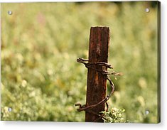 Barbed Wire Green Acrylic Print