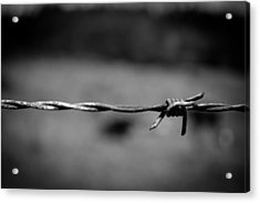 Barbed Wire Acrylic Print by Raimonds Raginskis