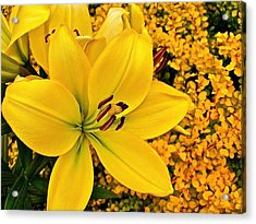 Barberry Sneakage Acrylic Print by Randy Rosenberger
