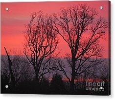 Bare Essentials Acrylic Print by Michele Bishop