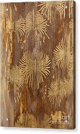 Bark Beetle Galleries Acrylic Print by Ted Kinsman
