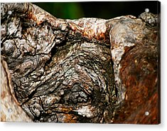 Bark Acrylic Print by Christopher Gaston