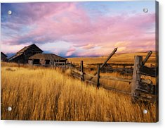 Barn And Field 2 Acrylic Print by Peter Olsen