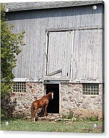 Barn And Horse Acrylic Print