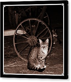 Barn Cat Acrylic Print