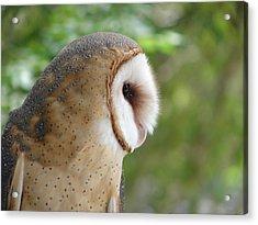 Barn Owl Acrylic Print by Randy J Heath