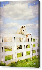 Barn Yard Dreamer Acrylic Print by Darren Fisher