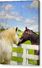 Barn Yard Kisses Acrylic Print by Darren Fisher