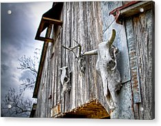 Barnstorm Acrylic Print by Pixel Perfect by Michael Moore