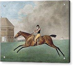 Baronet Acrylic Print