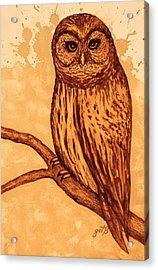 Barred Owl Coffee Painting Acrylic Print by Georgeta  Blanaru