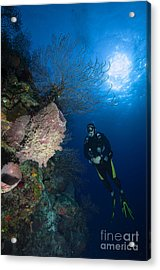 Barrel Sponge And Diver, Belize Acrylic Print by Todd Winner