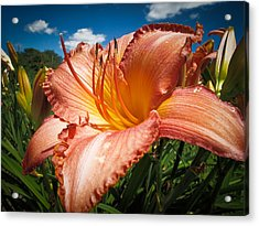 Basking In The Sunlight - Peach Colored Lily In A Flower Garden On A Hot Summer Day Acrylic Print by Chantal PhotoPix