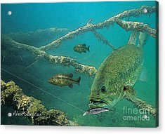 Bass Ambush Acrylic Print by Alex Suescun