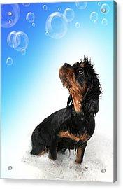 Bathtime Fun Acrylic Print by Jane Rix