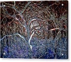 Bb's Tree 3 Acrylic Print
