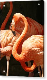 Be Flaming Acrylic Print by Pan Orsatti