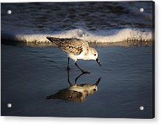 Beach Bird Acrylic Print by Paulette Thomas