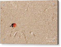 Beach Buggy Acrylic Print