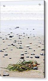 Beach Detail On Pacific Ocean Coast Of Canada Acrylic Print by Elena Elisseeva