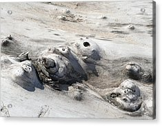 Beach Driftwood II Acrylic Print by Peg Toliver