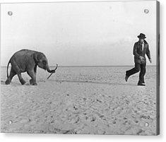 Beach Elephant Acrylic Print by John Drysdale