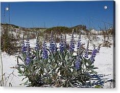 Beach Flora Acrylic Print by Charles Warren