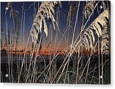 Beach Grass Acrylic Print by Susan McNamara
