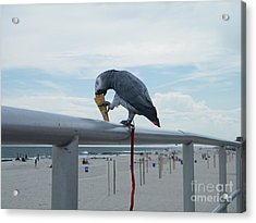 Beach It Parot Acrylic Print by Laurence Oliver