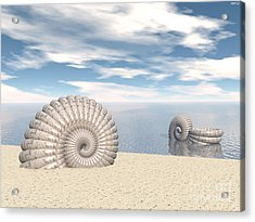 Acrylic Print featuring the digital art Beach Of Shells by Phil Perkins