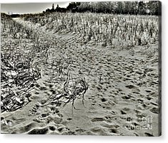 Acrylic Print featuring the photograph Beach Path by Lin Haring