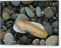 Beach Rocks And Clam Shell Acrylic Print