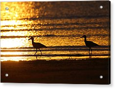 Beach Stone-curlews At Sunset Acrylic Print by Bruce J Robinson