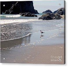 Beachcomber Acrylic Print by Sharon Elliott