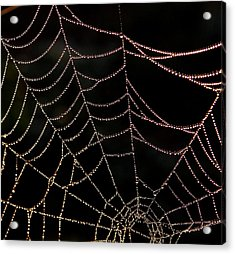 Acrylic Print featuring the photograph Beaded Beauty by Karen Harrison
