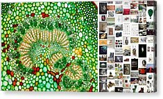Beads Of Green Acrylic Print by Holley Jacobs
