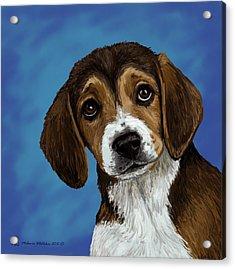 Beagle Eyes Acrylic Print by Melanie Whitaker