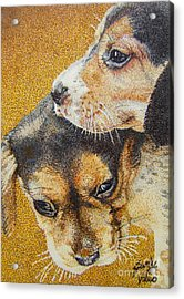Beagle Puppies Acrylic Print by Judy Skaltsounis