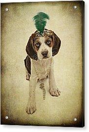 Beagle Puppy Flapper  Acrylic Print by Susan Schmitz