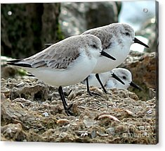 Beaks And Legs Acrylic Print by Theresa Willingham