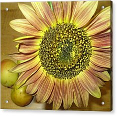 Beaming Sunflower Acrylic Print by Tracy Fallstrom