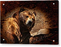 Bear Artistic Acrylic Print by Karol Livote