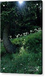 Bear-grass Ridge II Acrylic Print by Sharon Elliott