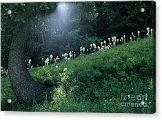 Bear-grass Ridge Acrylic Print by Sharon Elliott