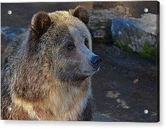 Bear Joy Acrylic Print