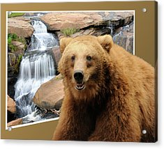 Bear Out Of Frame Acrylic Print
