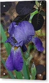 Acrylic Print featuring the photograph Bearded Iris by Michael Friedman