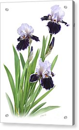 Bearded Iris Trio Acrylic Print by Artellus Artworks